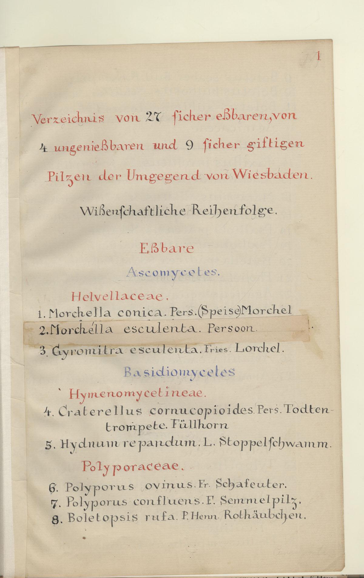 Die Pflanzenaquarelle des Emil Pfeiffer